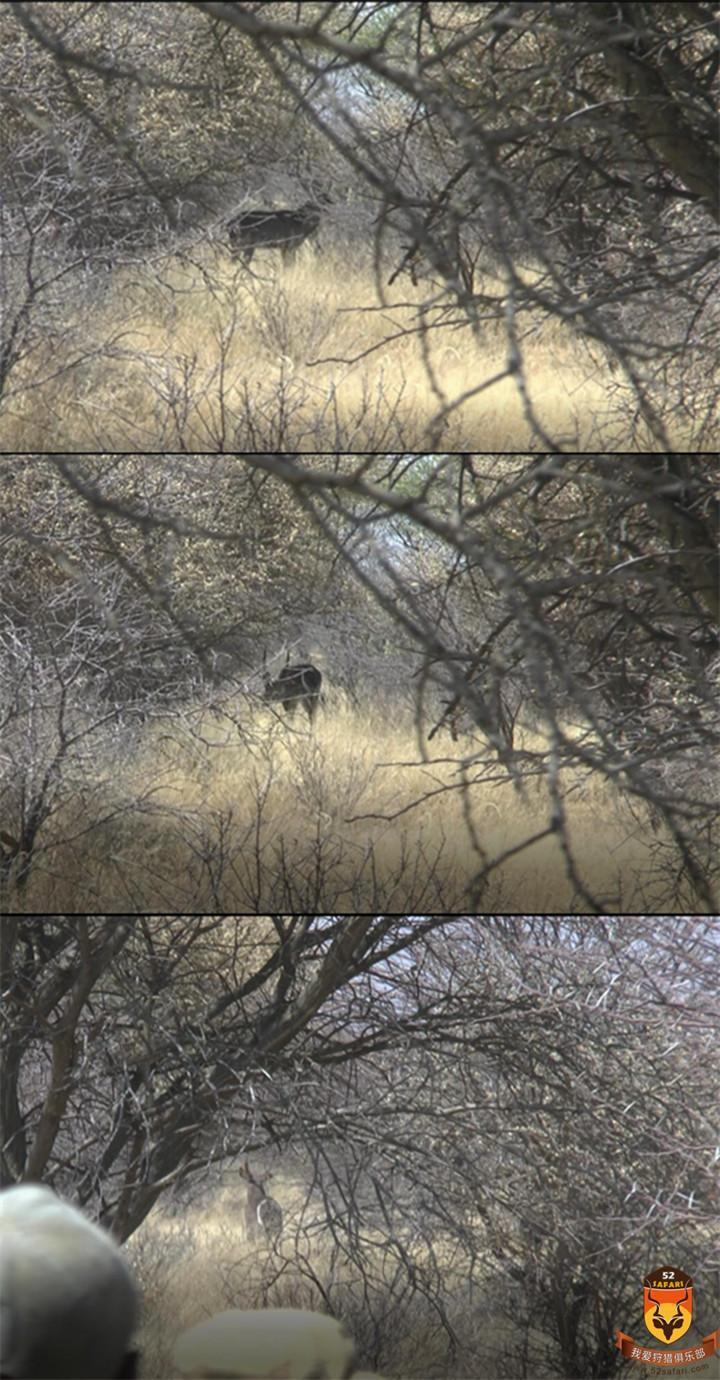 北美狩猎  俄罗斯狩猎 黑熊 驼鹿 马鹿 棕熊 花豹 猎豹 狮子 加拿大狩猎 美国狩猎 灰熊狩猎 黑熊狩猎 棕熊狩猎 驼鹿狩猎 熊狩猎 熊打猎 国外狩猎 国外打猎 国际狩猎 国际打猎 狩猎团 狩猎俱乐部 南非狩猎 非洲狩猎 纳米比亚狩猎 非洲打猎 南非打猎 纳米比亚打猎 非洲海钓 非洲钓鱼 纳米比亚海钓 纳米比亚钓鱼 南非钓鱼 南非海钓 定制狩猎 定制旅游 高端旅游 花豹狩猎 豹子狩猎 狮子狩猎 犀牛狩猎 俄罗斯狩猎 澳大利亚狩猎 澳大利亚海钓 澳大利亚打猎 澳大利亚垂钓 新西兰狩猎 新西兰海钓