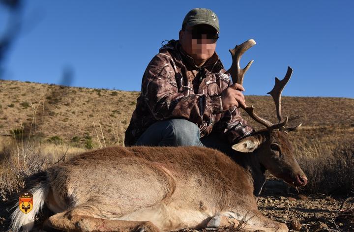 南非黇鹿狩猎
