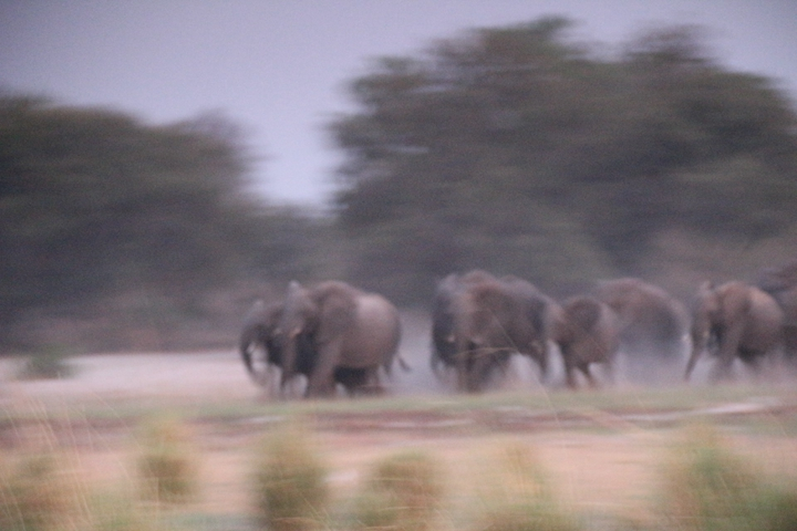 纳米比亚大象