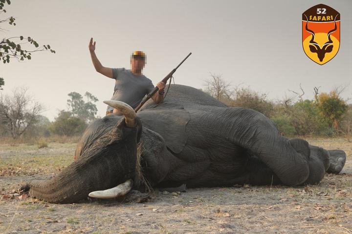 纳米比亚大象狩猎