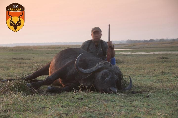 非洲野牛狩猎
