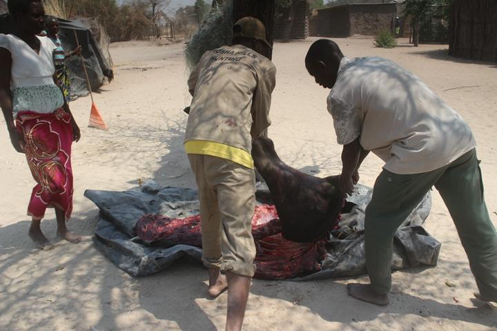 非洲野牛肉