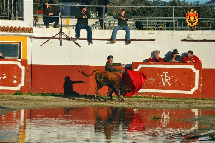 西班牙玩斗牛