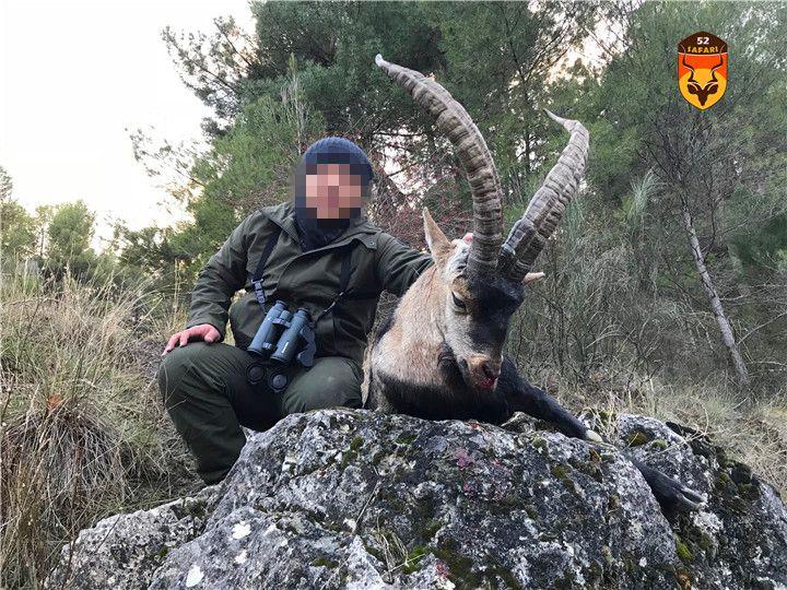 西班牙北山羊狩猎