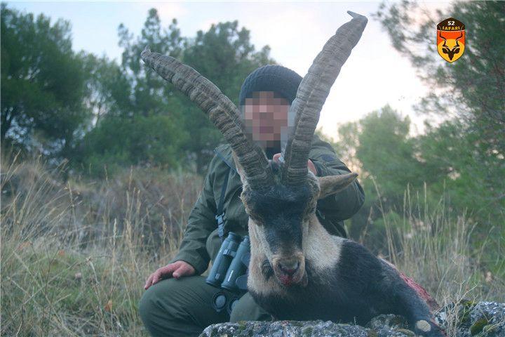 西班牙羊狩猎