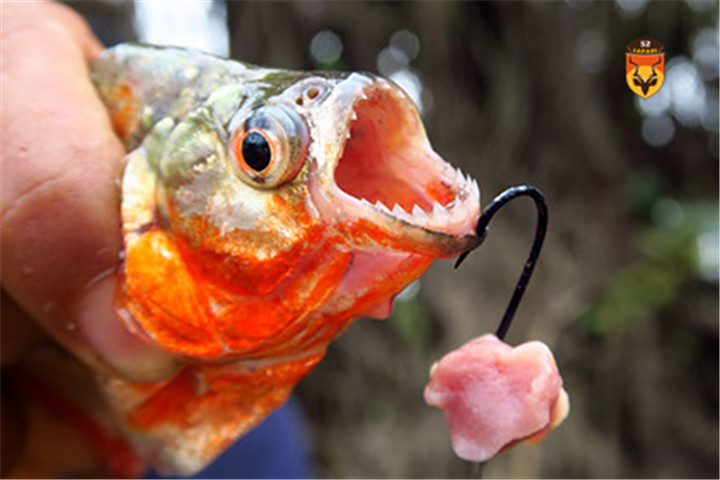 食人鱼钓鱼