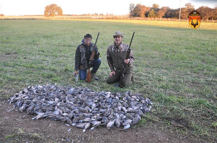 阿根廷斑鸠狩猎