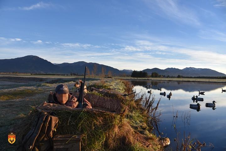 新西兰野鸭狩猎