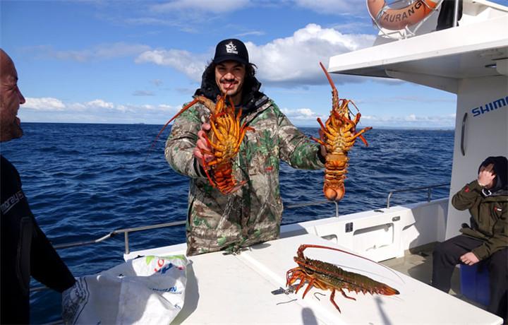 新西兰龙虾