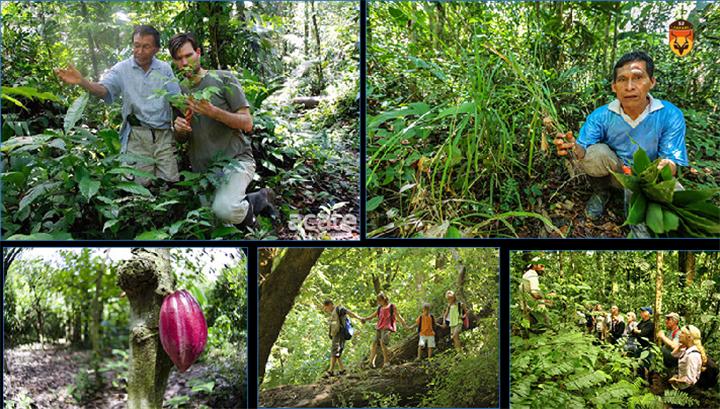 亚马逊定制旅游