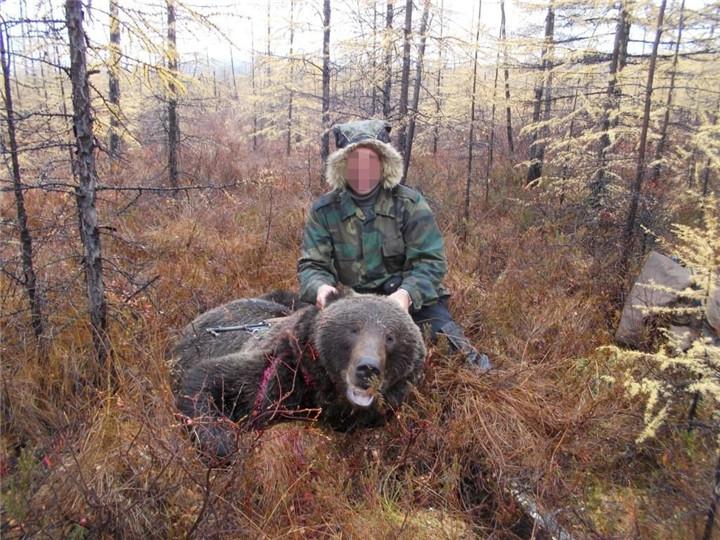 俄罗斯熊狩猎
