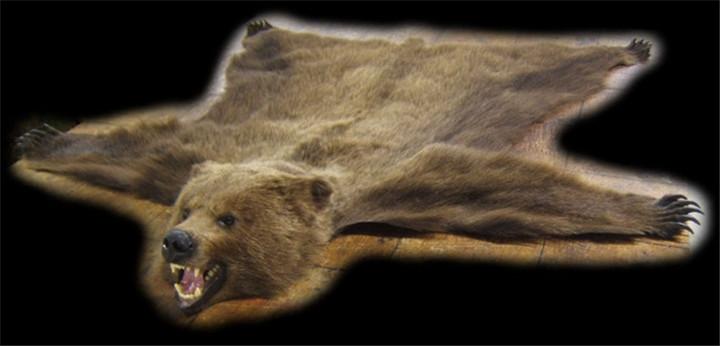俄罗斯熊标本