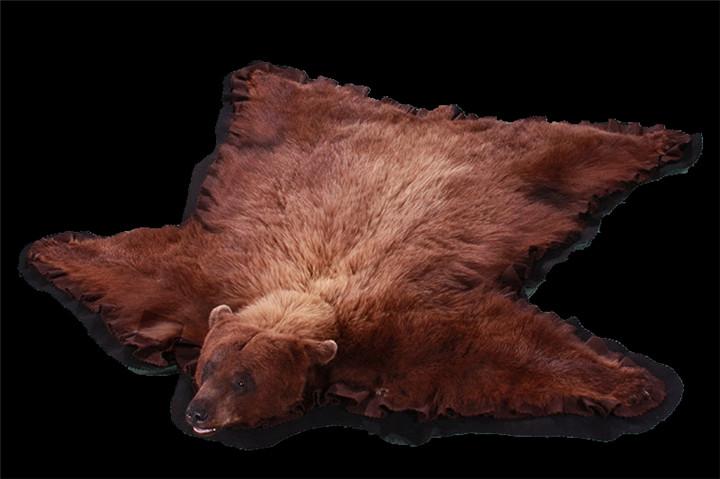 熊地毯标本