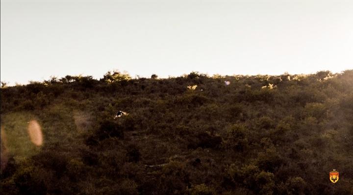 新西兰孔雀