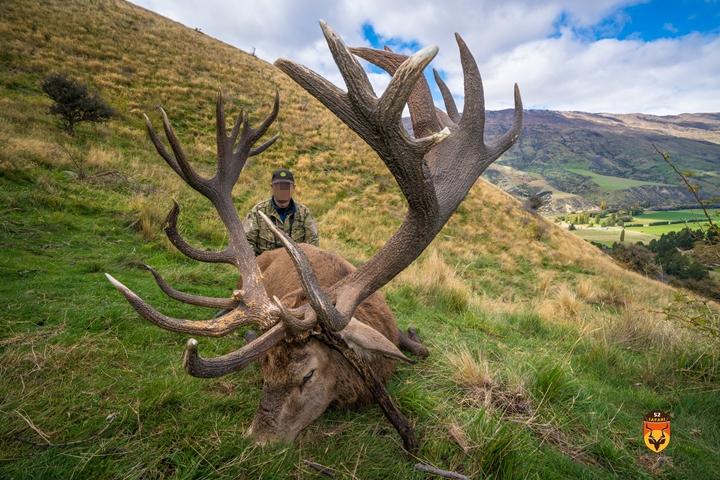 新西兰马鹿狩猎