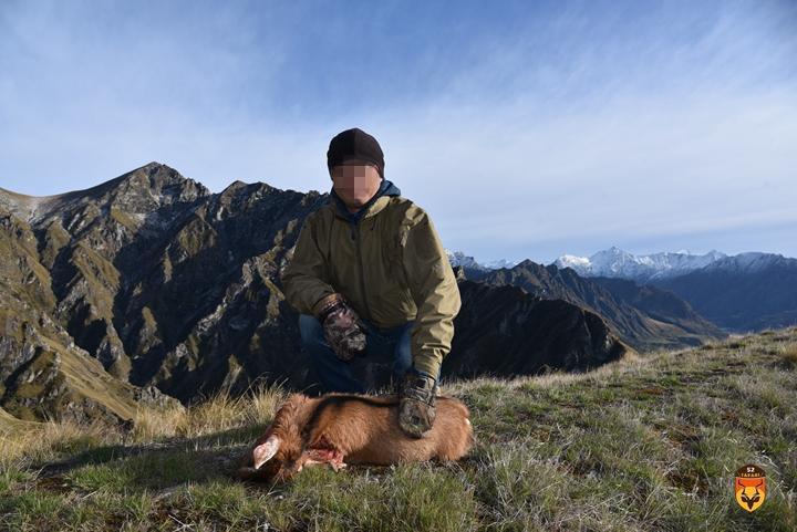 新西兰野山羊