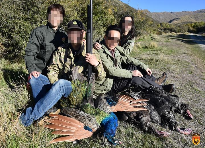 野孔雀狩猎