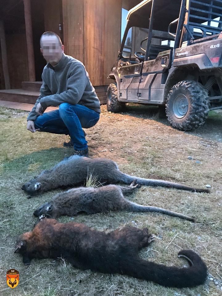 新西兰袋鼠和袋貂狩猎