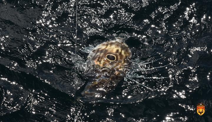 新西兰海鲂鱼钓鱼
