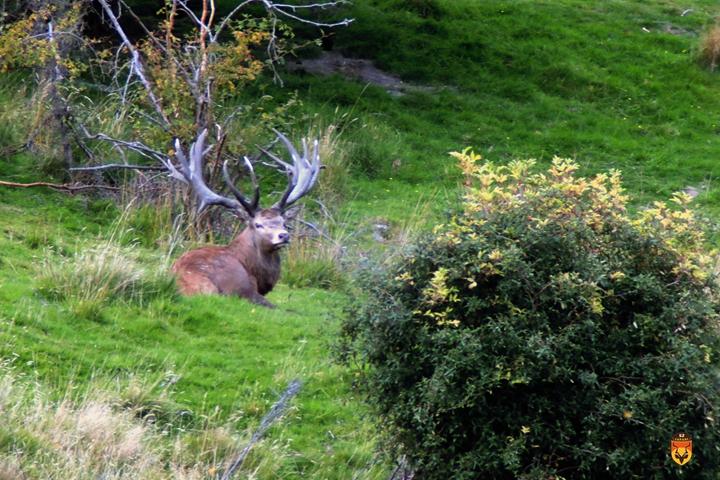 新西兰赤鹿狩猎团 新西兰马鹿狩猎团