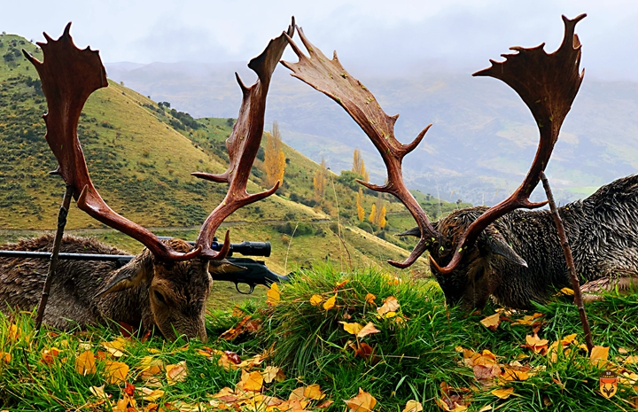 新西兰黇鹿 金牌黇鹿 巨大黇鹿 扁角鹿狩猎团 黇鹿狩猎团