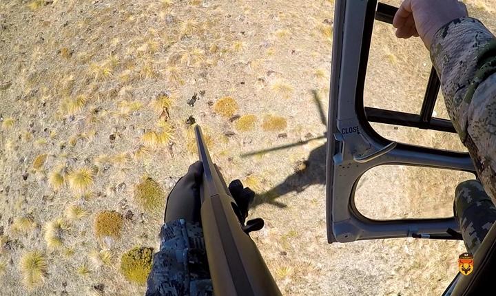 新西兰直升飞机山羊狩猎