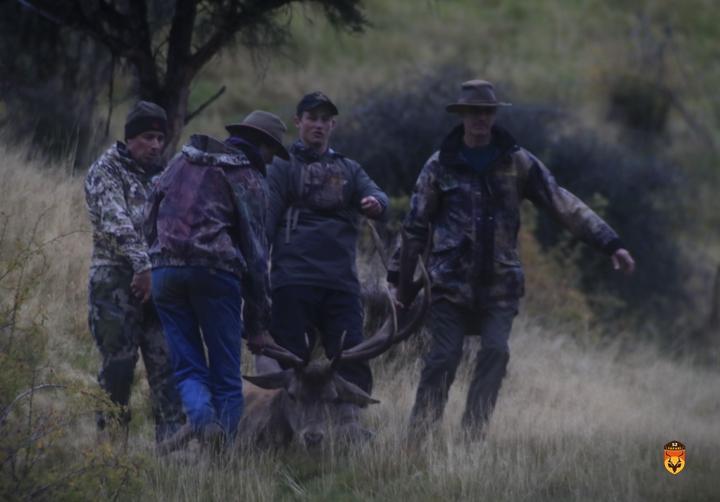 赤鹿围猎 新西兰马鹿狩猎团 新西兰赤鹿狩猎