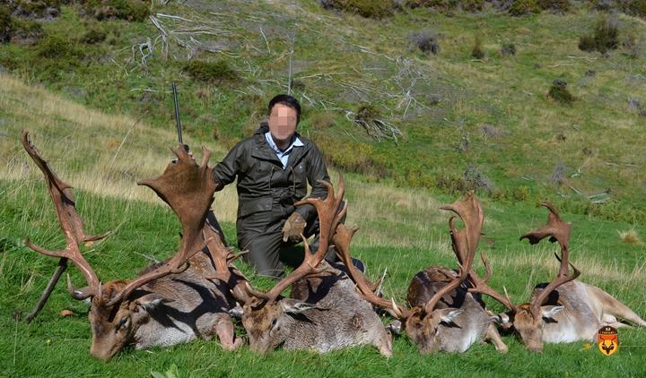 新西兰金牌黇鹿狩猎团