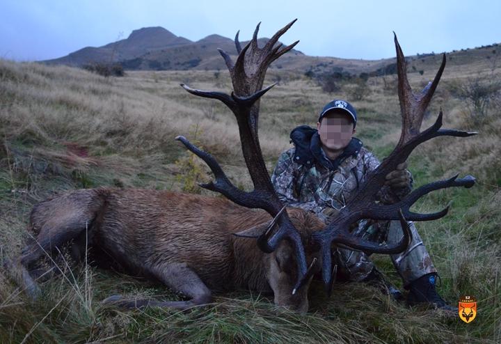 新西兰金牌赤鹿狩猎团 新西兰马鹿狩猎团 马鹿打猎 赤鹿打猎