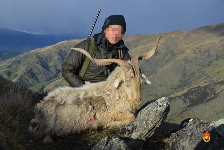 新西兰野山羊狩猎团 国际狩猎团