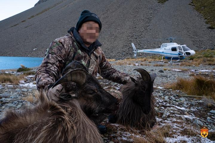 直升飞机塔尔羊狩猎