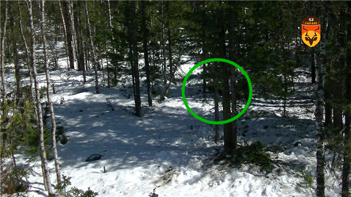 贝加尔湖棕熊狩猎