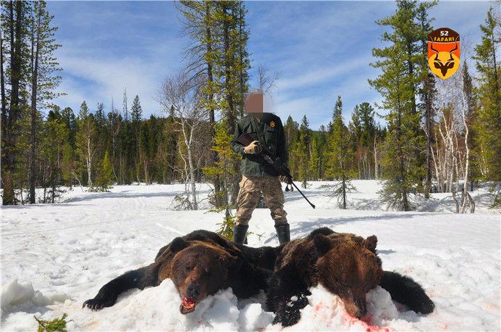 俄罗斯棕熊狩猎
