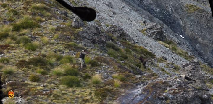 新西兰塔尔羊狩猎团