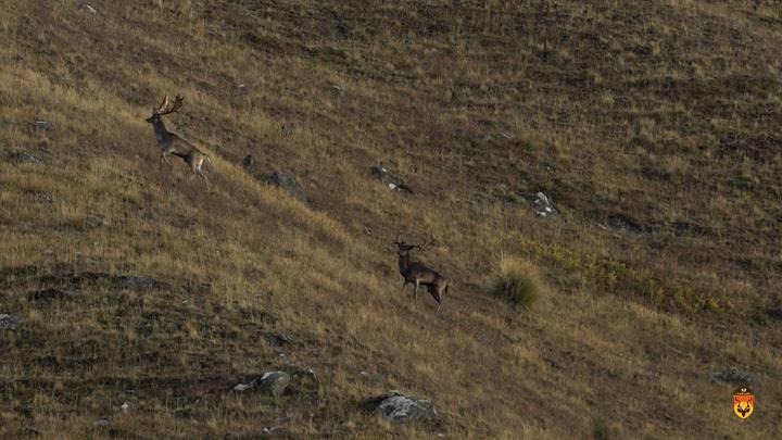 黇鹿狩猎团