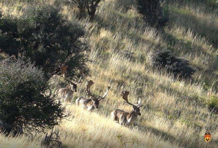 新西兰鹿狩猎