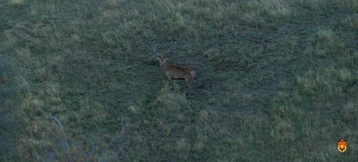 马鹿狩猎 赤鹿狩猎