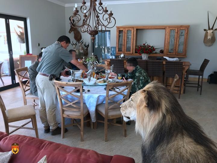 国际狩猎 狮子狩猎 雄狮狩猎 非洲狩猎 非洲打猎 南非打猎 南非狩猎