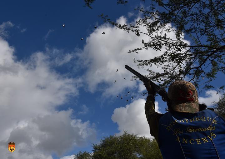 毛里求斯野鸽狩猎