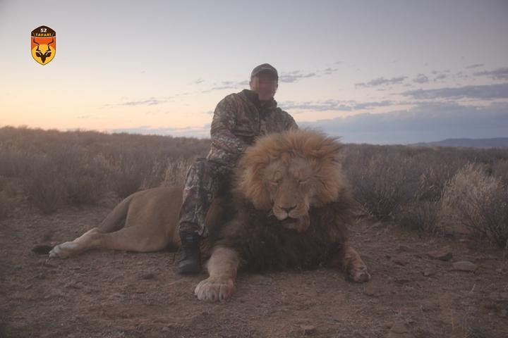 非洲狮狩猎团