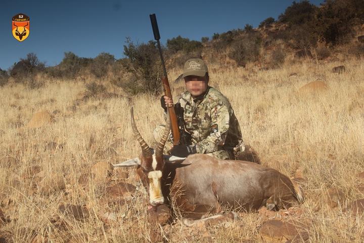 白脸牛羚狩猎