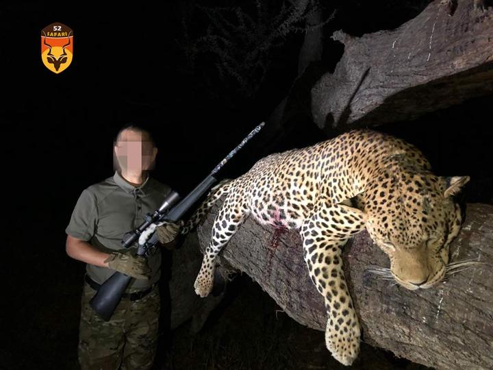 纳米比亚花豹狩猎 花豹狩猎 豹子狩猎