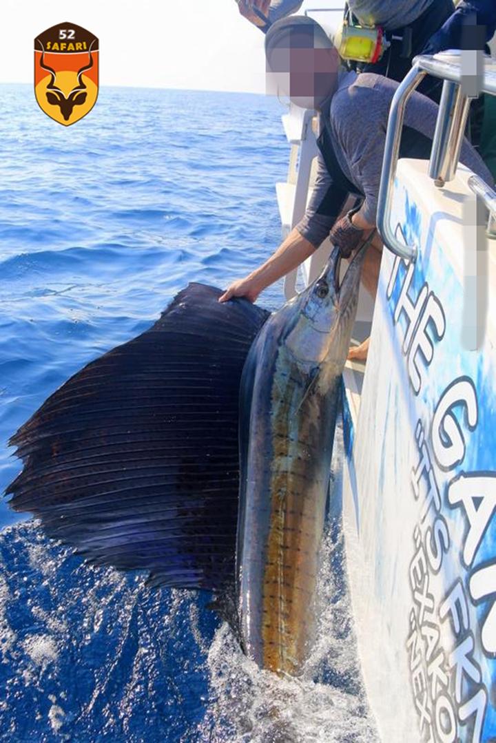 莫桑比克海钓 莫桑比克旗鱼