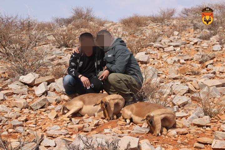 高角羚狩猎