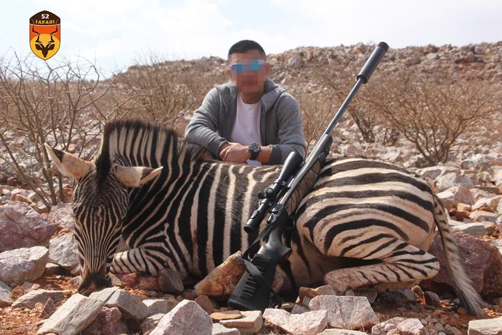 斑马狩猎 斑马打猎 非洲狩猎 南非狩猎