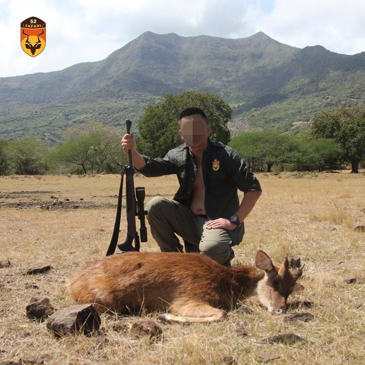毛里求斯鹿狩猎 水鹿狩猎
