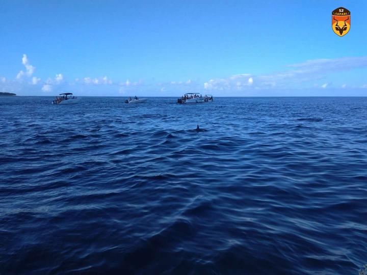 毛里求斯海豚