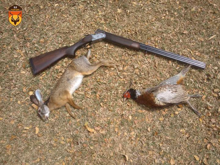 毛里求斯狩猎 毛里求斯兔子 毛里求斯野鸡 野鸡狩猎