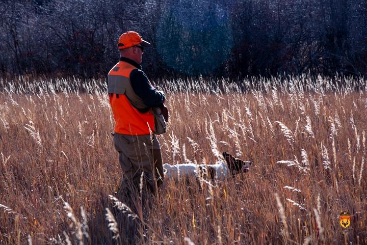 猎犬 美国野鸡 北美飞禽狩猎