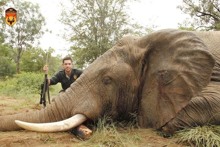 津巴布韦大象狩猎 非洲象狩猎